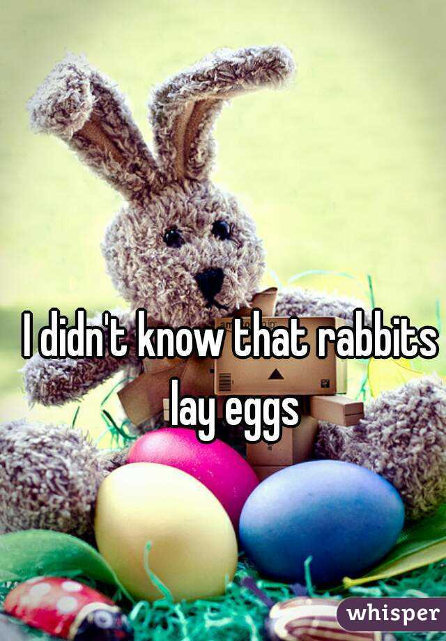 I didn't know that rabbits lay eggs