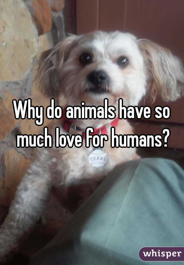 Why do animals have so much love for humans?