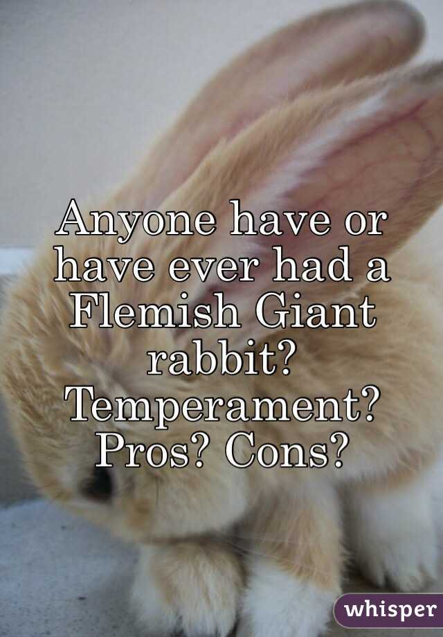 Anyone have or have ever had a Flemish Giant rabbit? Temperament? Pros? Cons?