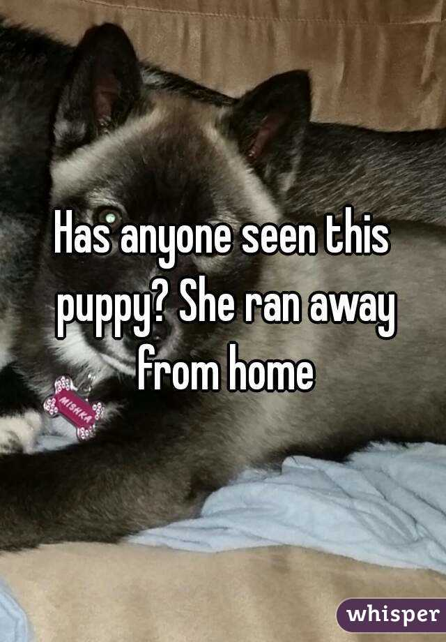 Has anyone seen this puppy? She ran away from home