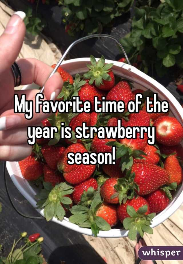 My favorite time of the year is strawberry season!