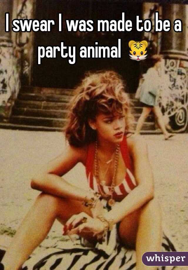 I swear I was made to be a party animal 🐯
