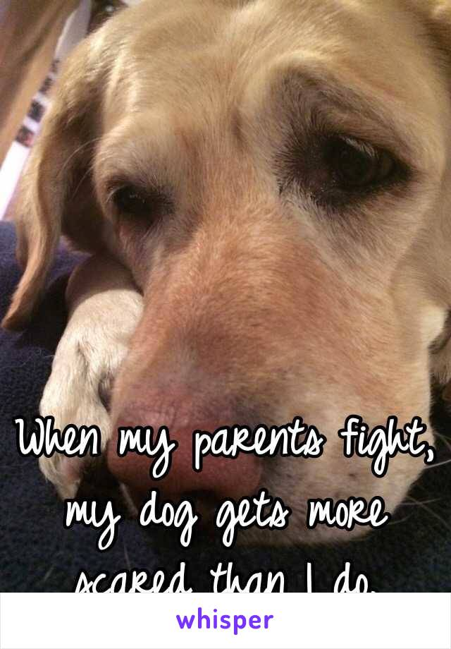 When my parents fight, my dog gets more scared than I do.