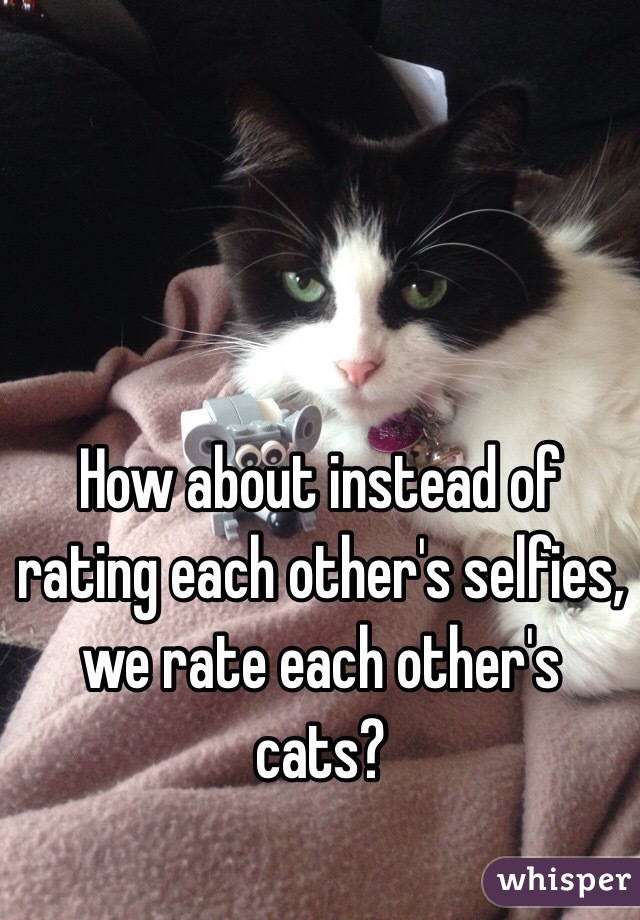 How about instead of rating each other's selfies, we rate each other's cats?