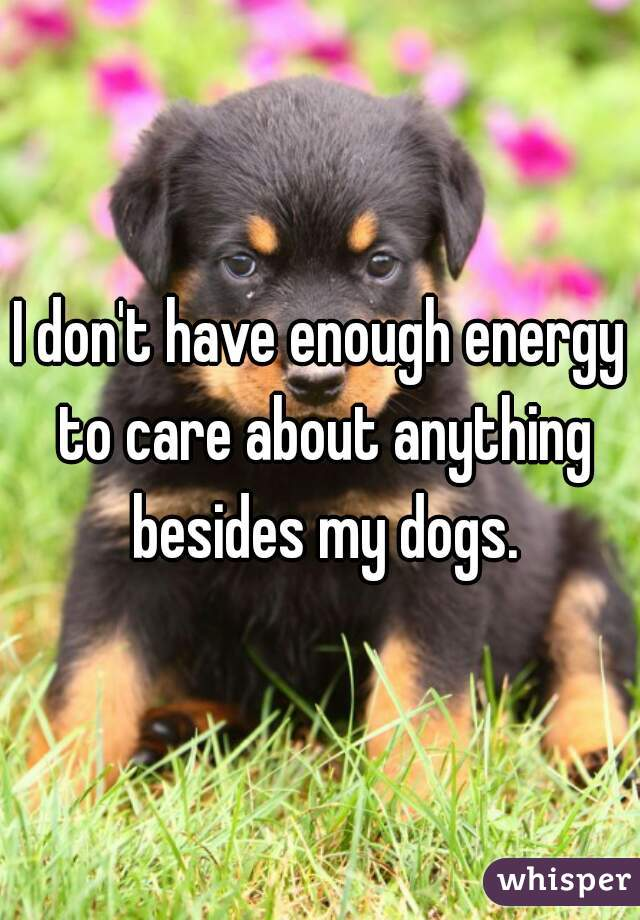 I don't have enough energy to care about anything besides my dogs.