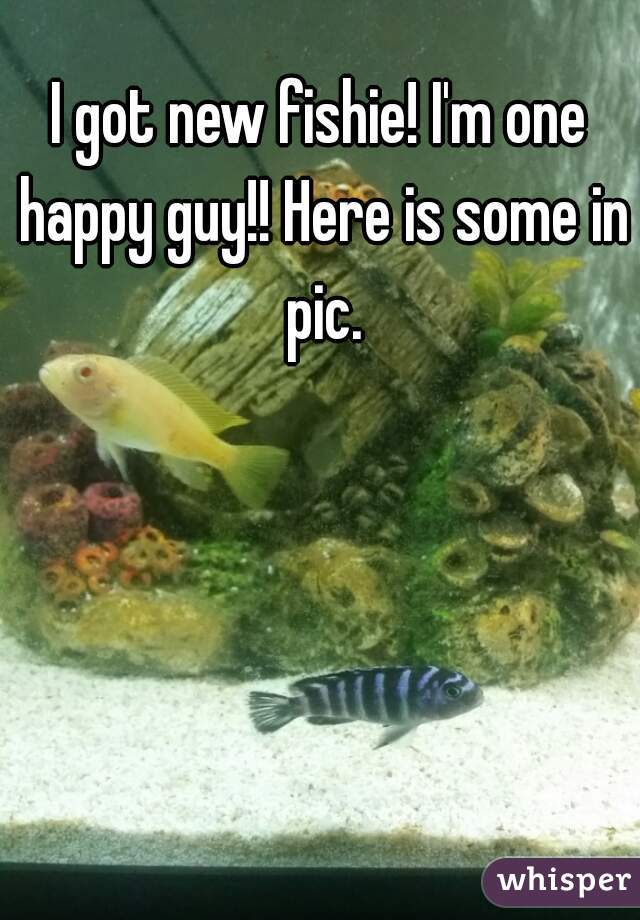 I got new fishie! I'm one happy guy!! Here is some in pic.