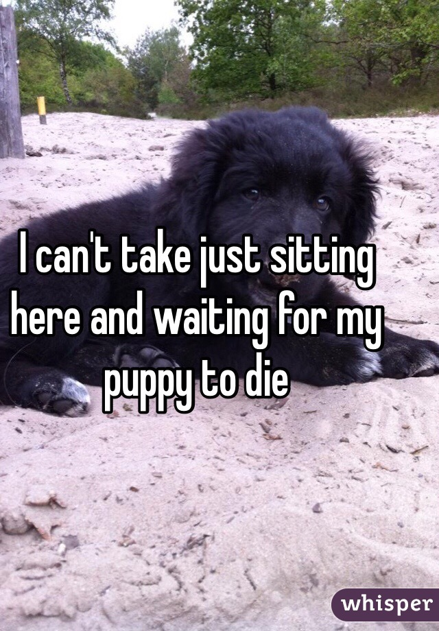 I can't take just sitting here and waiting for my puppy to die