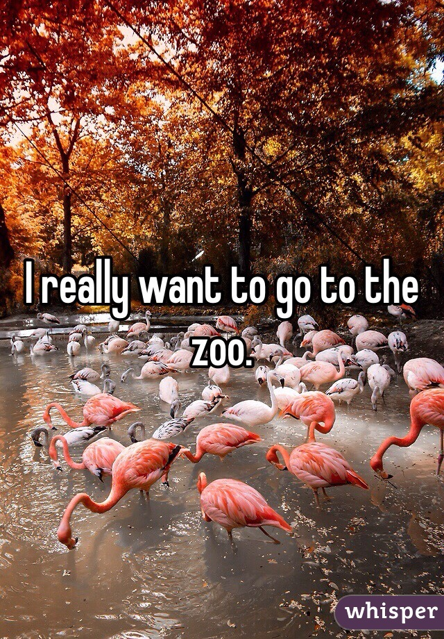 I really want to go to the zoo.