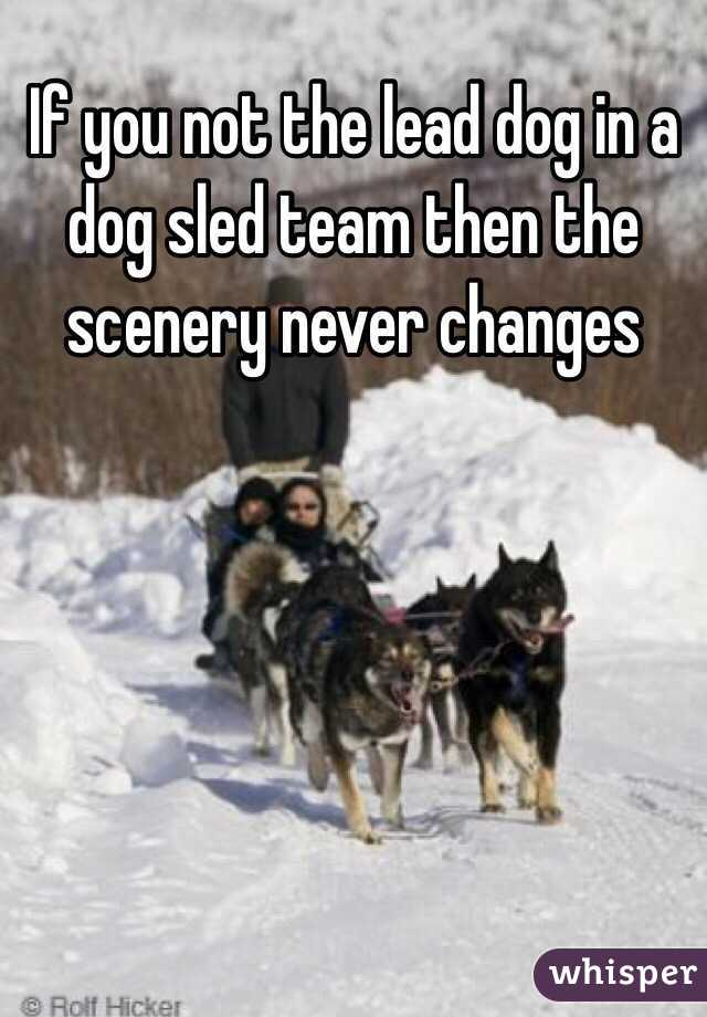 If you not the lead dog in a dog sled team then the scenery never changes