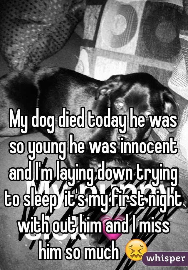 my dog died today he was so young he was innocent and i m laying down