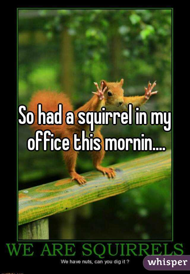 So had a squirrel in my office this mornin....