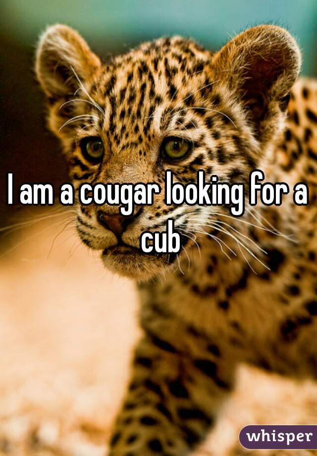 I am a cougar looking for a cub