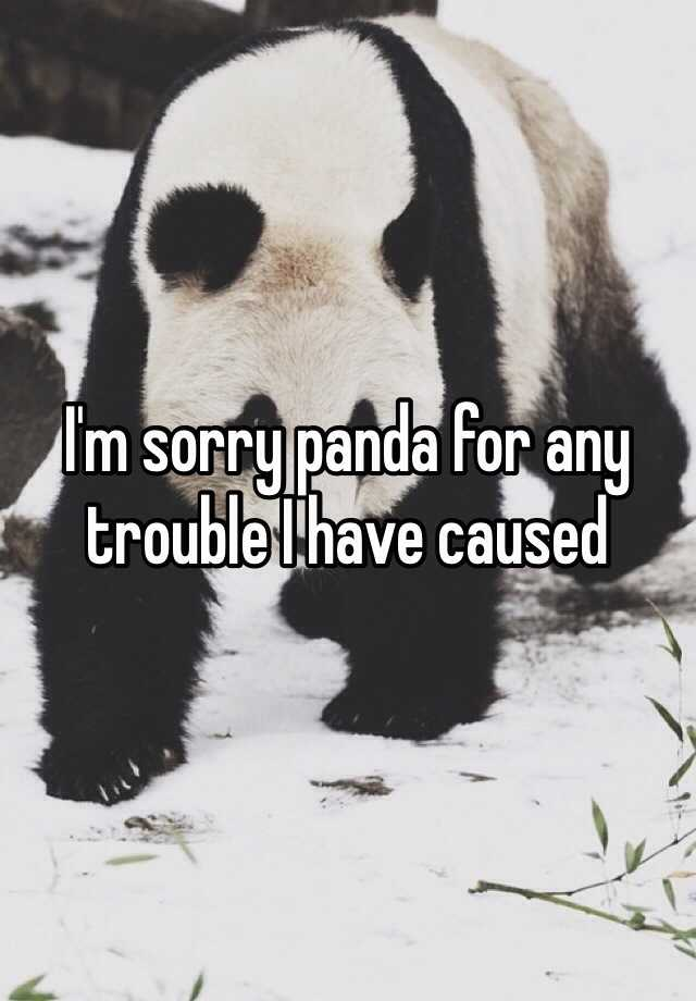 Image result for sorry panda