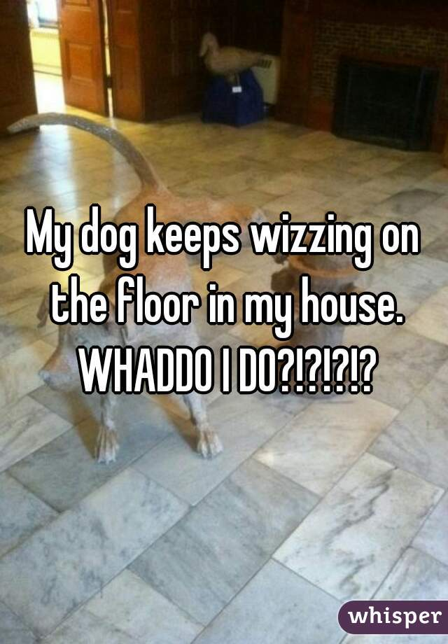My dog keeps wizzing on the floor in my house. WHADDO I DO?!?!?!?