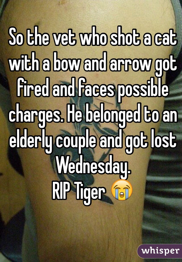 So the vet who shot a cat with a bow and arrow got fired and faces possible charges. He belonged to an elderly couple and got lost Wednesday. RIP Tiger 😭