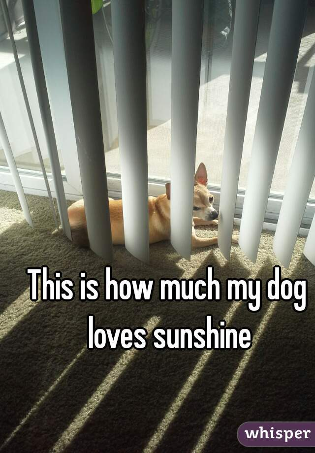 This is how much my dog loves sunshine