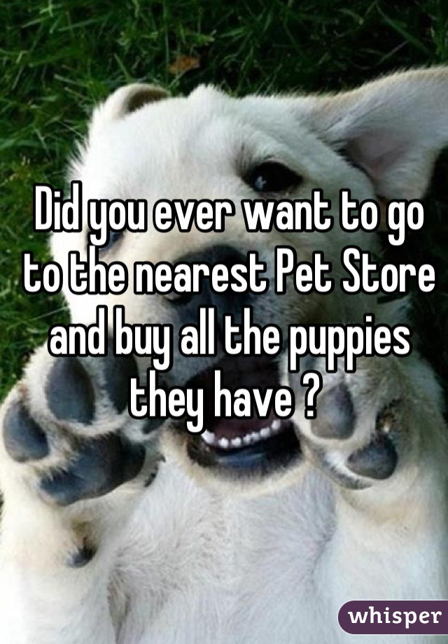 Did you ever want to go to the nearest Pet Store and buy all the puppies they have ?