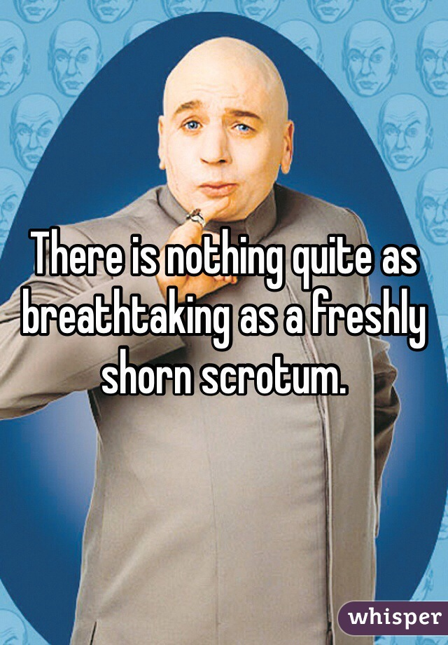 There is nothing quite as breathtaking as a freshly shorn scrotum.