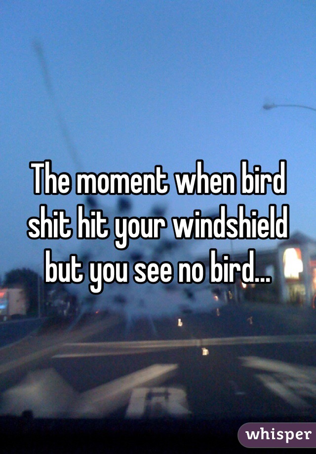 The moment when bird shit hit your windshield but you see no bird...
