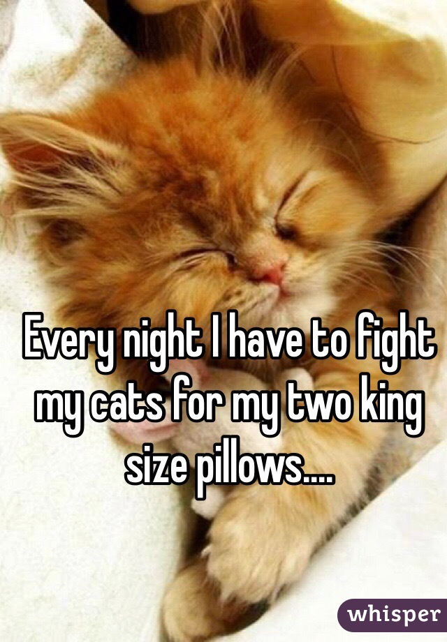 Every night I have to fight my cats for my two king size pillows....