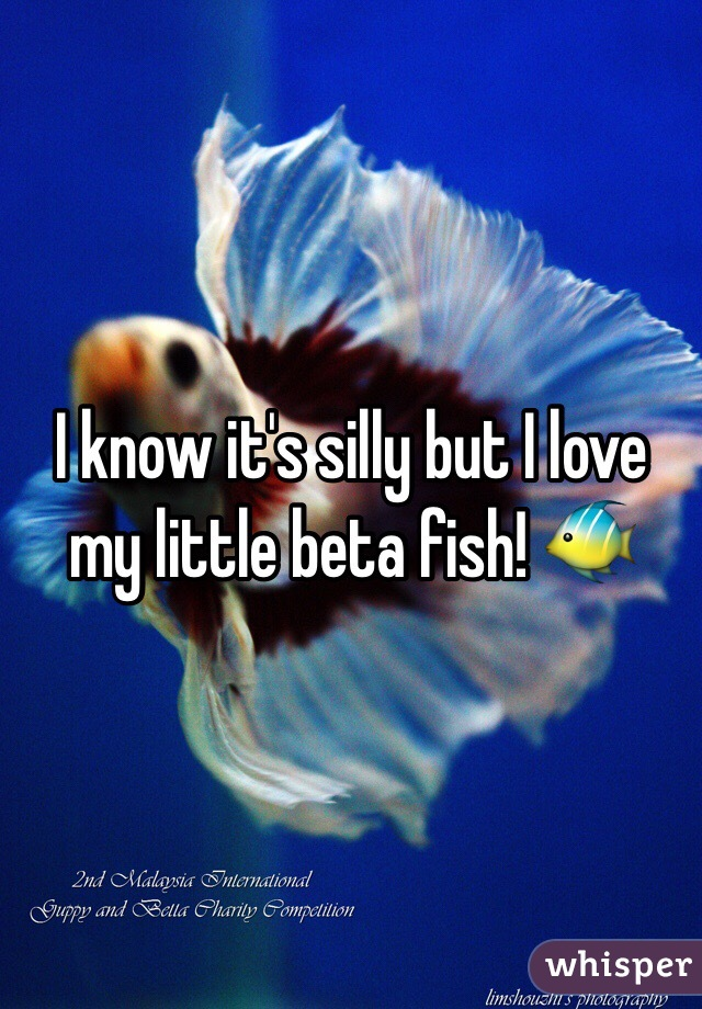 I know it's silly but I love my little beta fish! 🐠