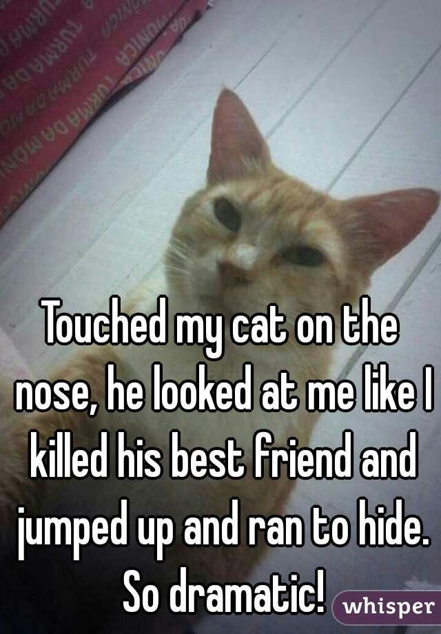 Touched my cat on the nose, he looked at me like I killed his best friend and jumped up and ran to hide. So dramatic!