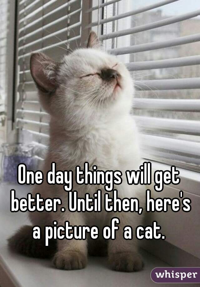 051454be51938d37889341ad94482c20f96f4c wm?v=3 one day things will get better until then, here's a picture of a cat