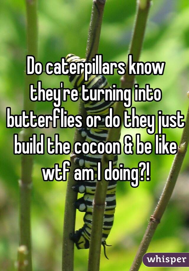Do caterpillars know they're turning into butterflies or do they just build the cocoon & be like wtf am I doing?!