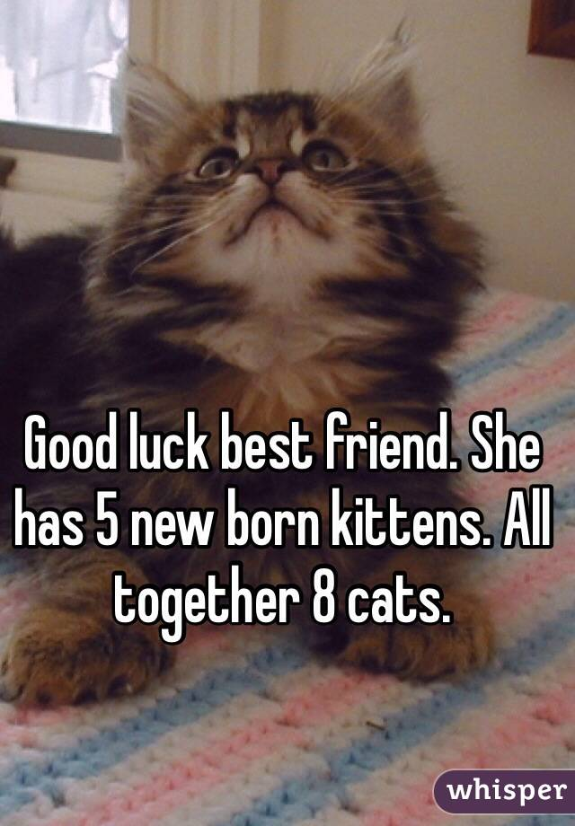 Good luck best friend. She has 5 new born kittens. All together 8 cats.
