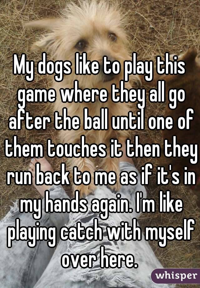 My dogs like to play this game where they all go after the ball until one of them touches it then they run back to me as if it's in my hands again. I'm like playing catch with myself over here.