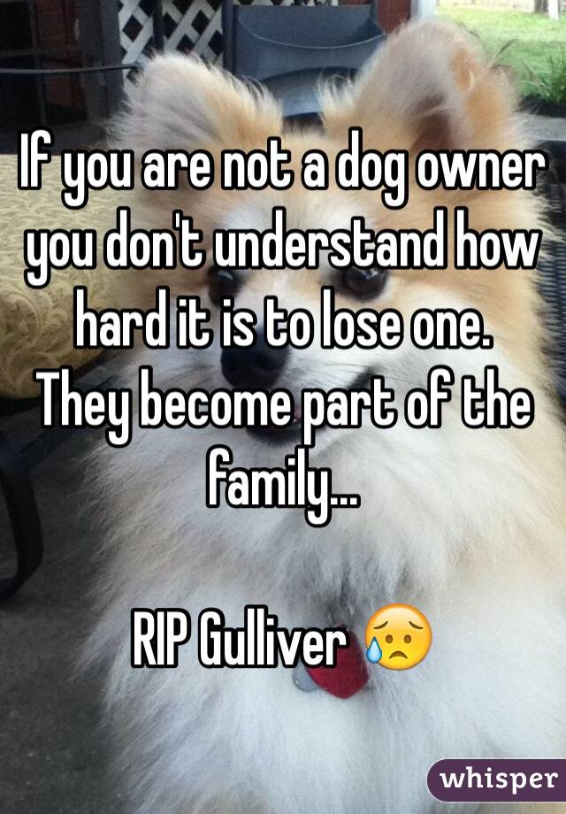 If you are not a dog owner you don't understand how hard it is to lose one.  They become part of the family...  RIP Gulliver 😥
