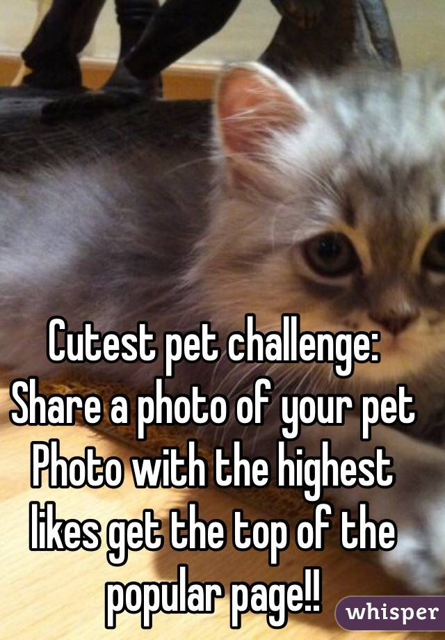 Cutest pet challenge: Share a photo of your pet  Photo with the highest likes get the top of the popular page!!