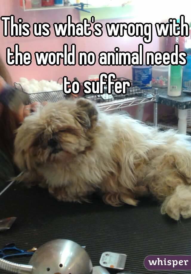 This us what's wrong with the world no animal needs to suffer