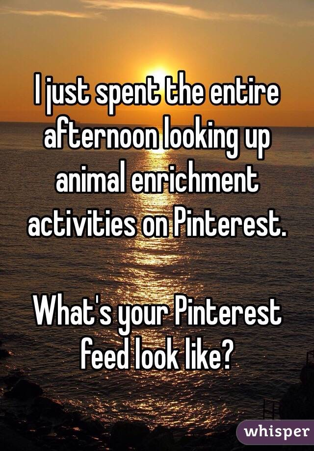 I just spent the entire afternoon looking up animal enrichment activities on Pinterest.   What's your Pinterest feed look like?