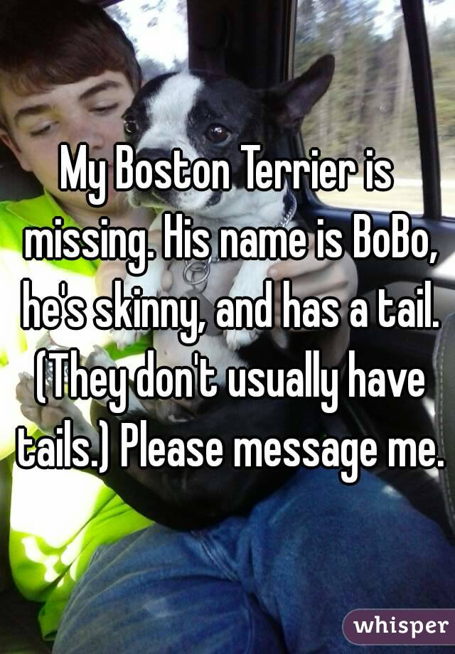 My Boston Terrier is missing. His name is BoBo, he's skinny, and has a tail. (They don't usually have tails.) Please message me.