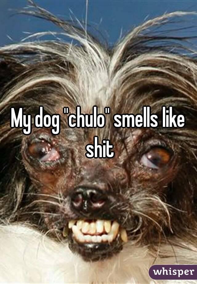 dog smells like poop