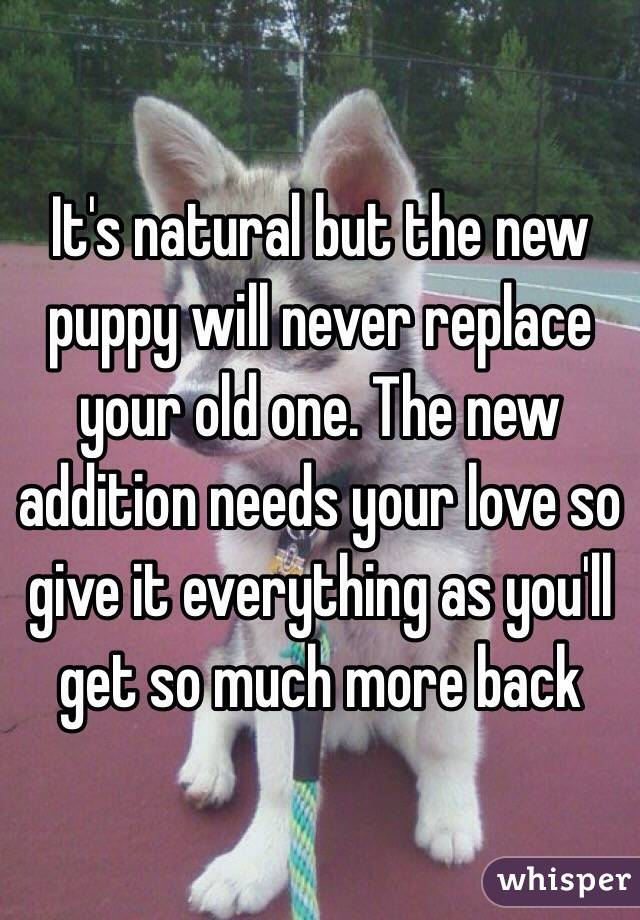 It's natural but the new puppy will never replace your old one. The new addition needs your love so give it everything as you'll get so much more back