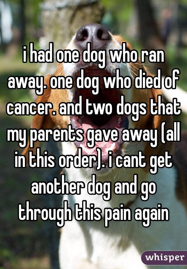 i had one dog who ran away. one dog who died of cancer. and two dogs that my parents gave away (all in this order). i cant get another dog and go through this pain again