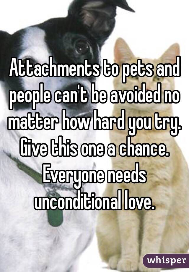 Attachments to pets and people can't be avoided no matter how hard you try.  Give this one a chance.  Everyone needs unconditional love.