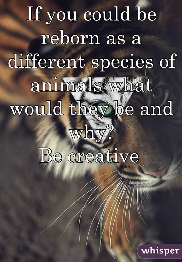 If you could be reborn as a different species of animals what would they be and why? Be creative