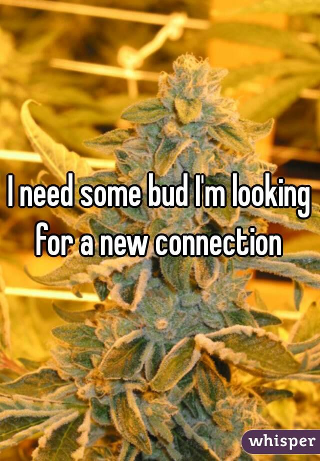 I need some bud I'm looking for a new connection