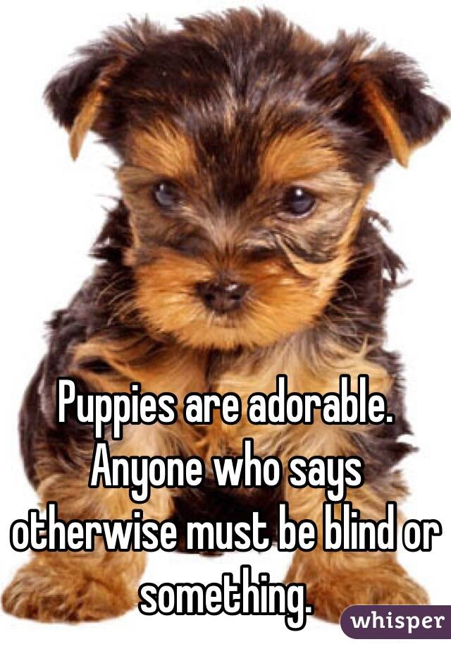 Puppies are adorable. Anyone who says otherwise must be blind or something.
