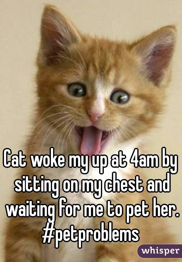Cat woke my up at 4am by sitting on my chest and waiting for me to pet her. #petproblems