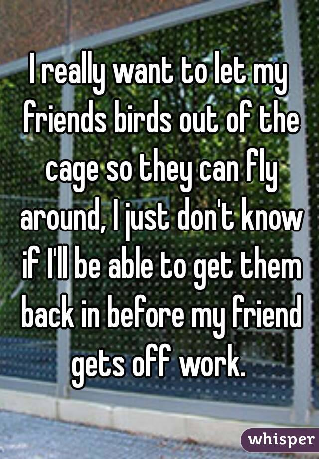 I really want to let my friends birds out of the cage so they can fly around, I just don't know if I'll be able to get them back in before my friend gets off work.