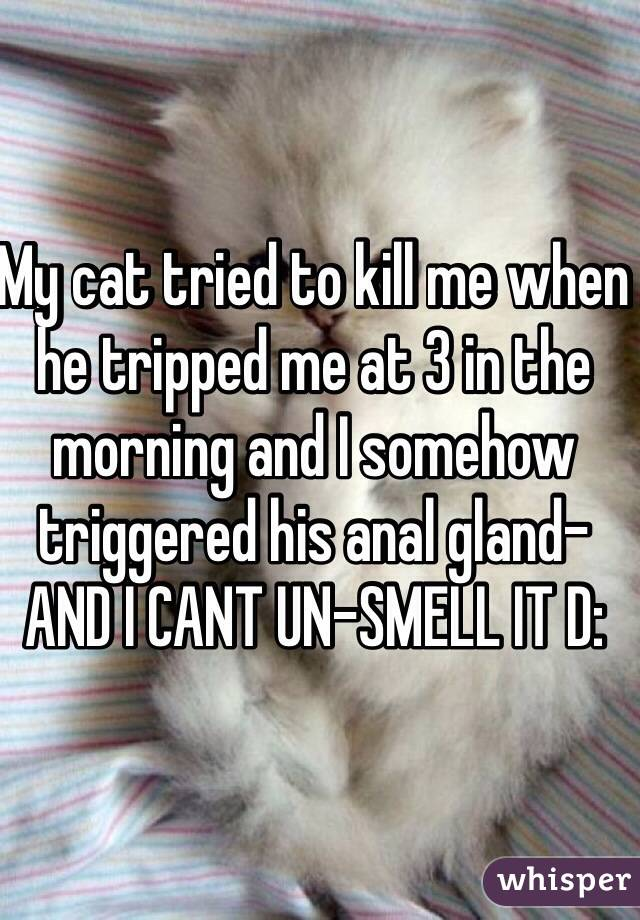 My cat tried to kill me when he tripped me at 3 in the morning and I somehow triggered his anal gland- AND I CANT UN-SMELL IT D: