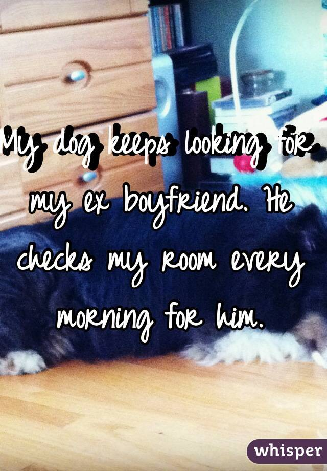My dog keeps looking for my ex boyfriend. He checks my room every morning for him.