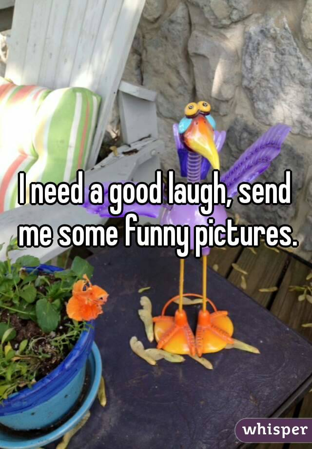 I need a good laugh, send me some funny pictures.