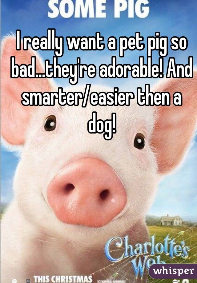 I really want a pet pig so bad...they're adorable! And smarter/easier then a dog!