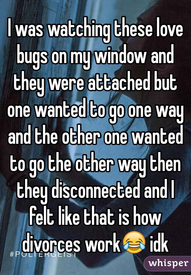 I was watching these love bugs on my window and they were attached but one wanted to go one way and the other one wanted to go the other way then they disconnected and I felt like that is how divorces work😂 idk