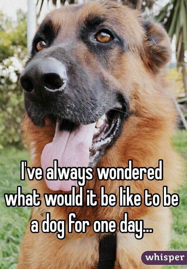 I've always wondered what would it be like to be a dog for one day...